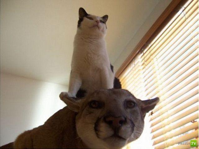 Эти забавные животные, часть 104 (43 фото)