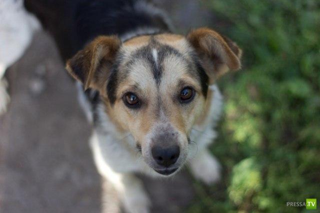 Собака забрала болезнь хозяина (2 фото)