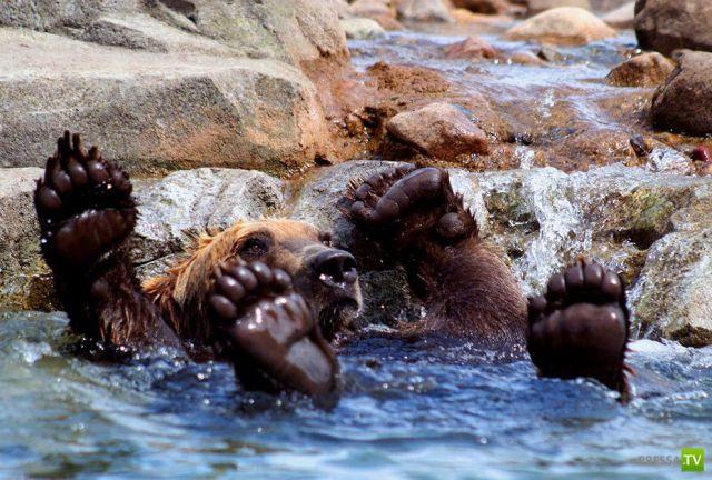 Эти забавные животные, часть 106 (41 фото)
