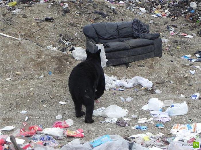 Медведь нашел старый диван (3 фото)