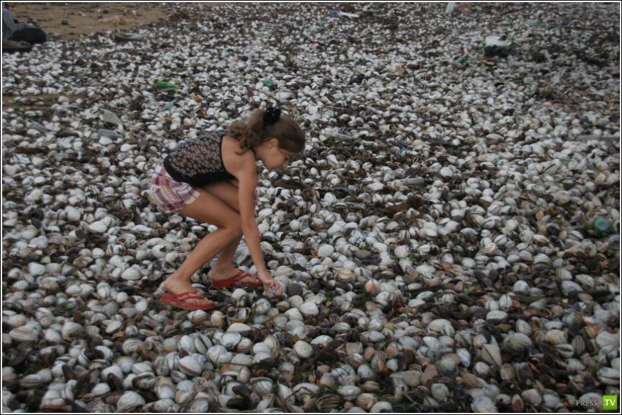 Тайфун Болавен выбросил на пляжи Владивостока тонны деликатесов (33 фото)