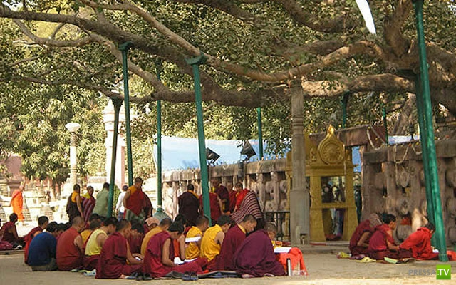 Священные и культовые деревья (11 фото)