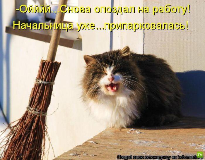 Самые лучшие котоматрицы (49 фото)