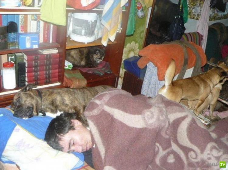 Приют для кошек и собак в частном доме (25 фото)