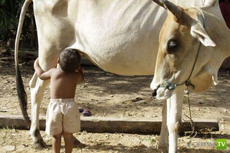Самый быстрый способ получения молока... (2 фото)