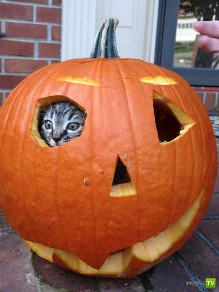 Забавные животные, октябрь 9 (42 фото)