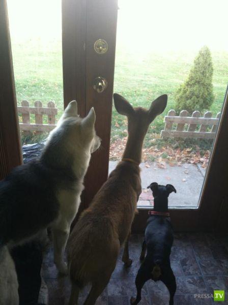 Забавные животные, октябрь 10 (41 фото)