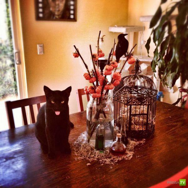 Забавные животные, октябрь 12 (38 фото)