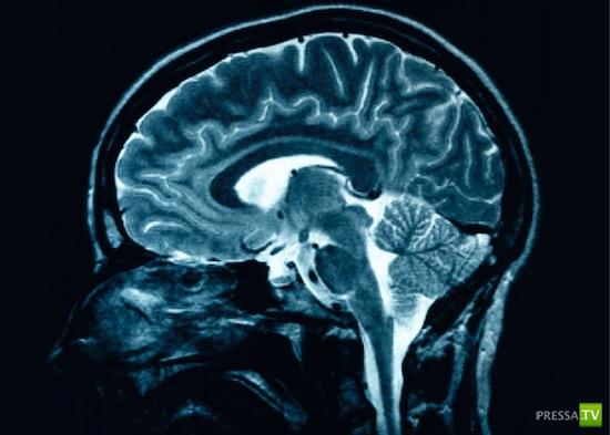Наш мозг легко обмануть...