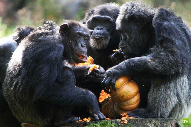 Забавные животные, октябрь 15 (46 фото)