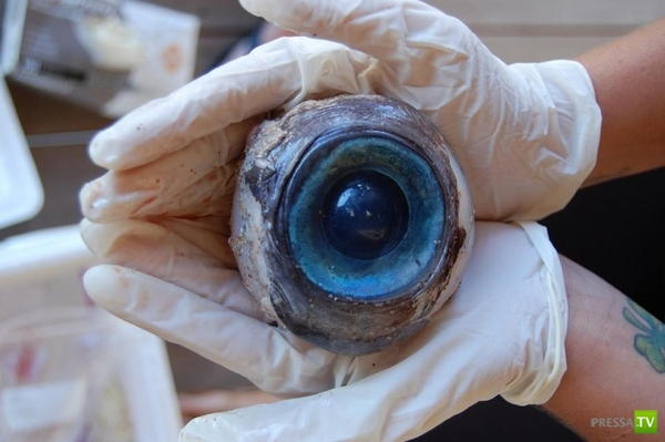 На одном из пляжей Флориды найдено огромное глазное яблоко (2 фото)