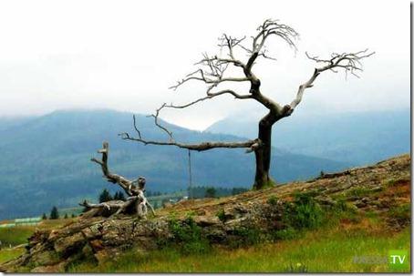 Самые необычные деревья на Земле (10 фото)