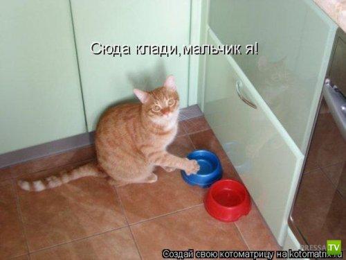 Улыбательные котоматрицы (30 фото)