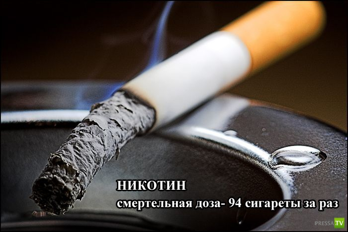 Смертельно опасно для человека (9 фото)