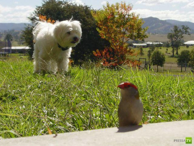 Забавные животные, октябрь 19 (43 фото)