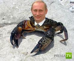 Почему Путин — краб, Медведев — шмель, а Ленин — гриб - История появления этих глупых ассоциаций (3 фото)