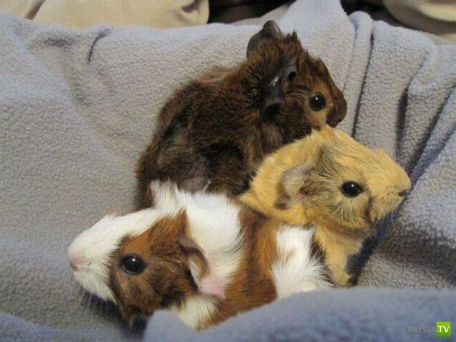 Милые и забавные зверюшки, часть 2 (45 фото)