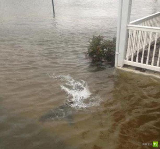В результате урагана Сэнди улицы Атлантик-Сити кишат акулами