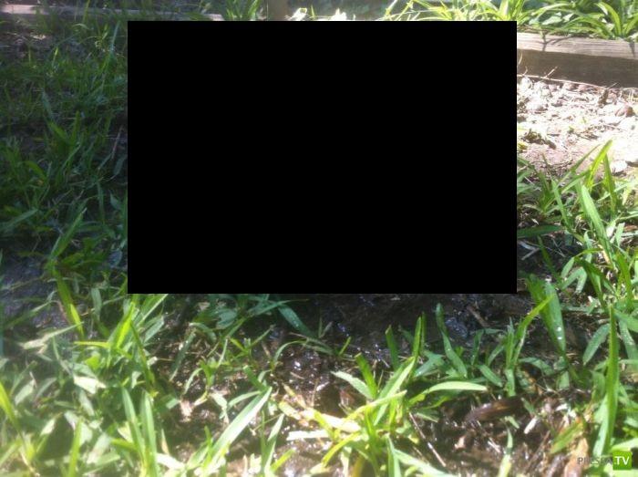 Хорошенький домашний питомец (7 фото)