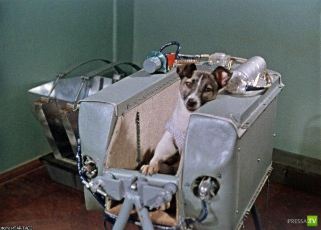 55 лет назад Лайка полетела в космос... (3 фото)