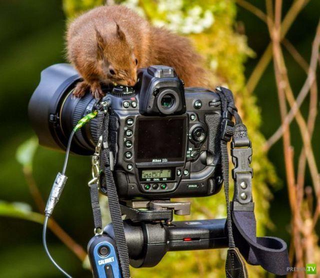 фото смешного фотоаппарата нечего считать