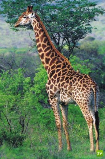 Необычные факты о животных...