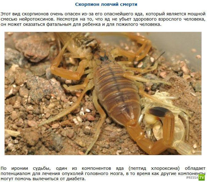 Подборка самых маленьких, но невероятно опасных существ (9 фото)