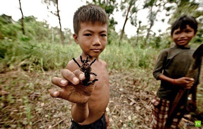 Тарантулы - деликатес детей Камбоджи (12 фото)