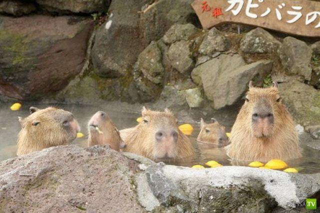Милые и забавные зверюшки, часть 28 (40 фото)