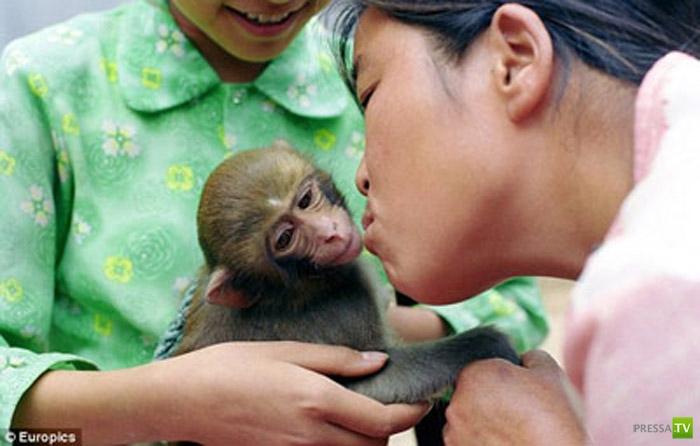 Китаянка кормит обезьян своей грудью... (3 фото)