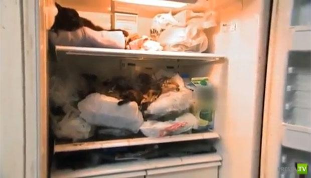 Женщина заморозила 100 трупов кошек в холодильнике... (2 фото + видео)