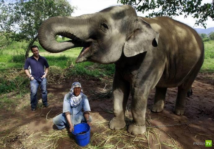 Самый дорогой кофе в мире из какашек слонов (6 фото)