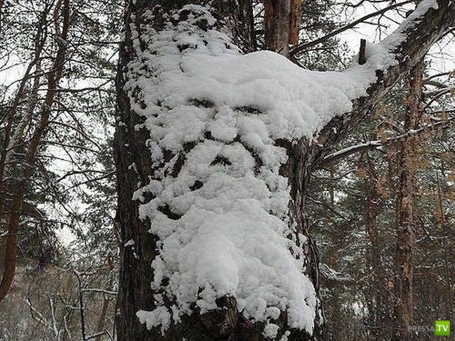 Прикольные фотографии, декабрь 14 (86 фото)