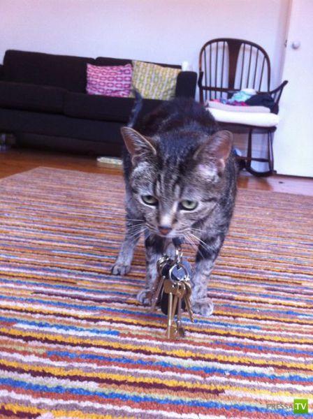 Кот-воришка... (6 фото)