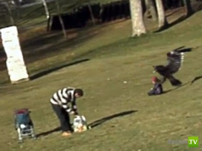 Видео про канадского орла-киднепера - подделка!