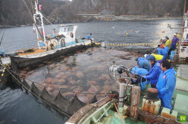 Огромные медузы напали на побережье Японии (10 фото)