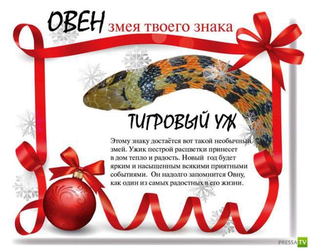 Тест-гороскоп : Змея твоего знака (13 фото)