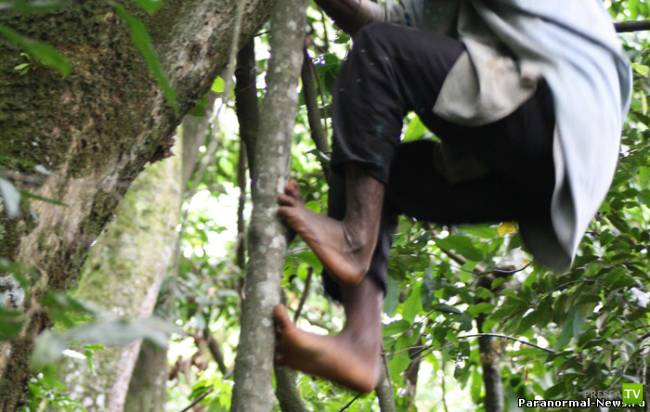Тва - племя пигмеев с обезьяньими ногами (фото + видео)
