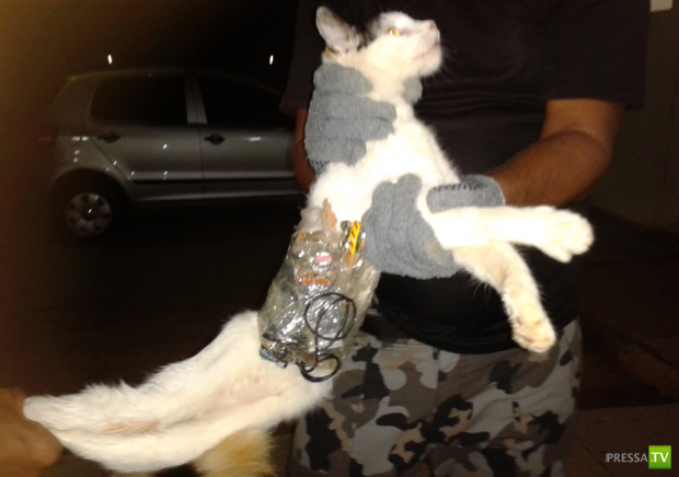 Кошка помогала при побеге из тюрьмы в Бразилии (2 фото + видео)