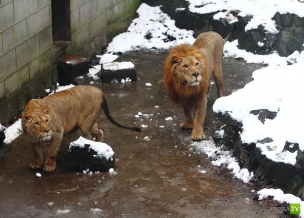 Дурацкое развлечение в китайском зоопарке... (6 фото)