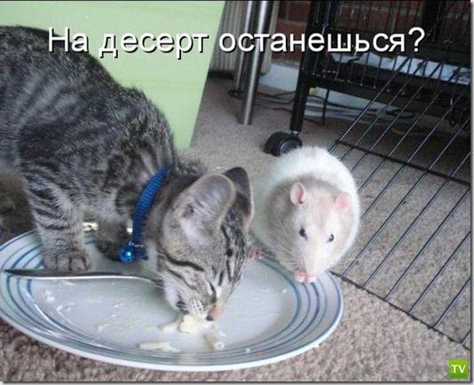 Кошачьи фотоприкольчики (40 фото)