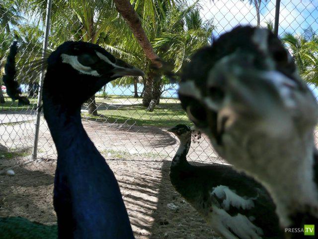 Милые и забавные зверюшки, часть 49 (44 фото)