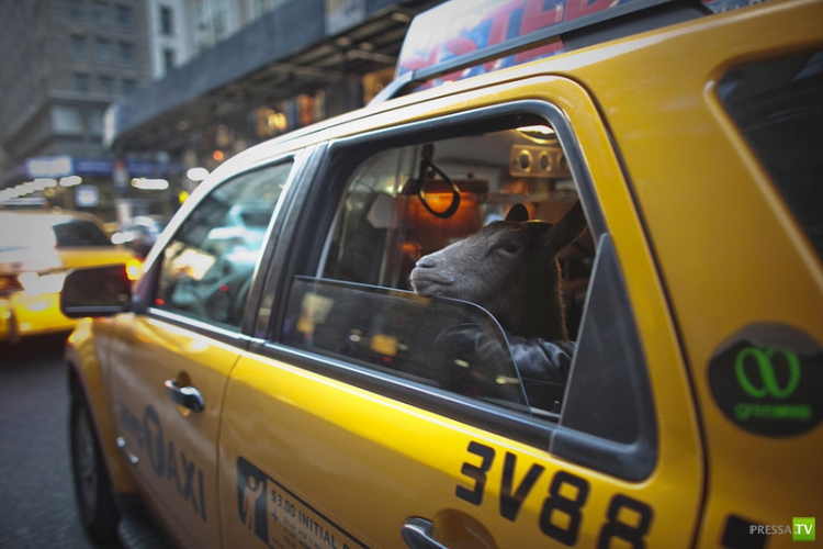 Твиттер Нью-Йоркского таксиста...