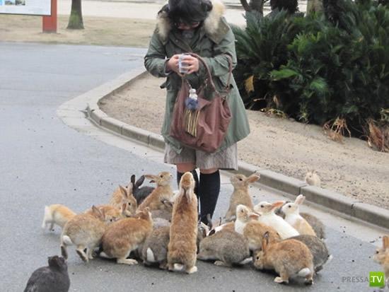 Остров Окуношима – японский рай для кроликов ... (6 фото + видео)