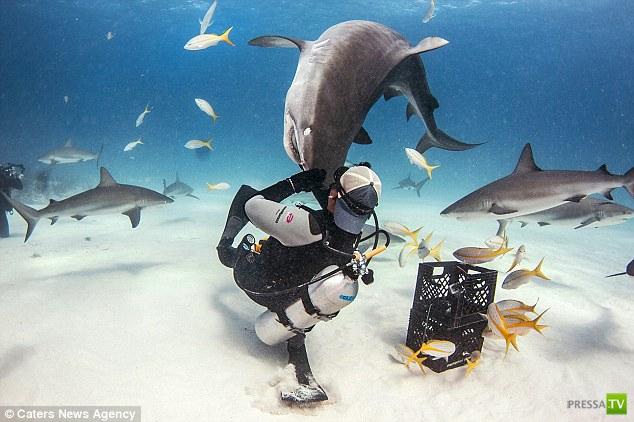 Эли Мартинес (Eli Martinez) - заклинатель акул (5 фото + видео)
