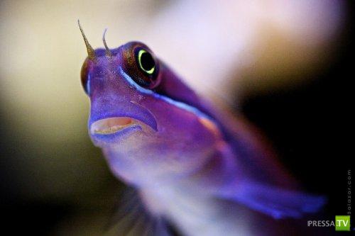 Подводные макроснимки обитателей рифов фотографа Феликса Салазара (19 фото)