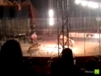 В Мексике тигр растерзал дрессировщика на арене
