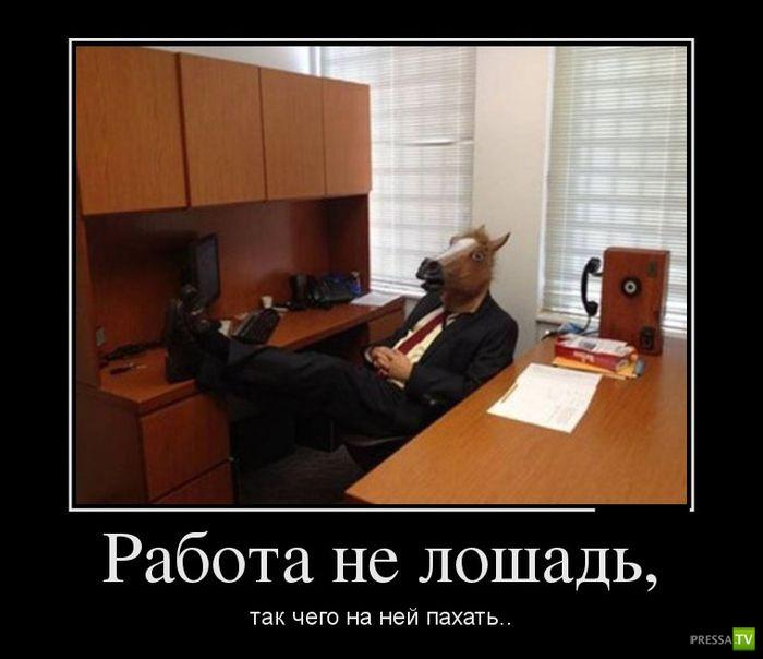Демотиваторы на февраль 6 (31 фото)