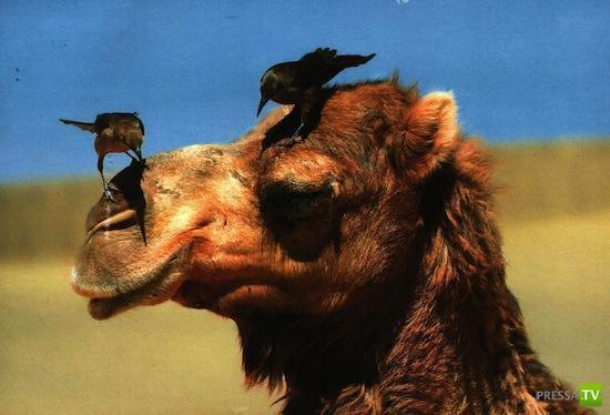 Подборка неизвестных фактов о животных (11 фото)