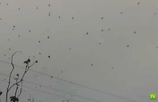 Дождь из пауков выпал в Бразилии (2 фото + видео)